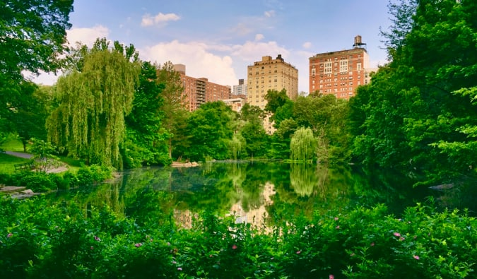 The lush green trees and flowers of Central Park in New York City
